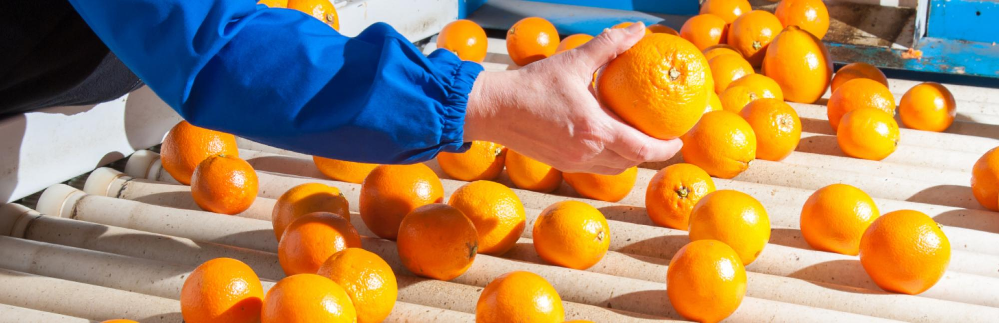 Hero oranges Food Waste Reduction Roadmap Progress 2020